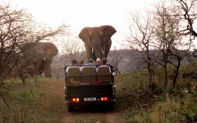 Rhino River Lodge Adventure